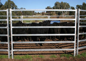 Oval Tube Cow Fence Panel